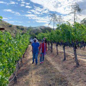 Sage Ridge Vineyard